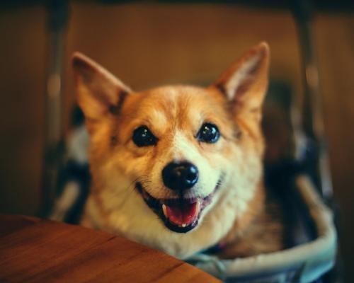 犬轮状病毒感染有什么症状?犬轮状病毒感染的诊断及治